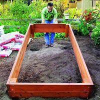 my garden tips