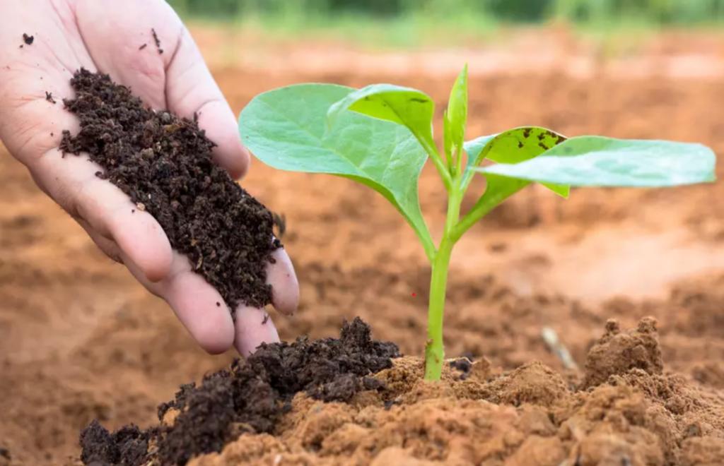9 Easy Gardening Tips for Beginners