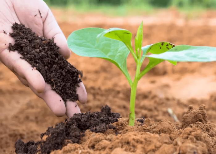 9 easy Gardening tricks for Beginner gardeners